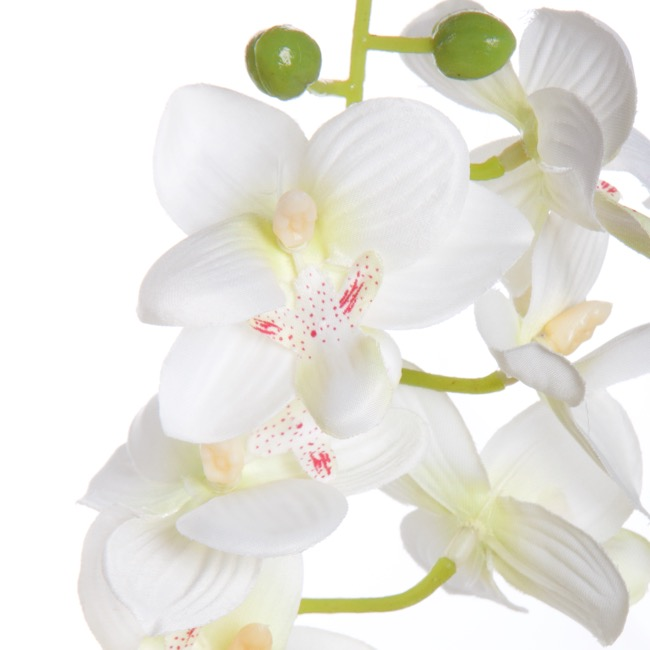 Artificial Orchids - Butterfly Orchid Phalaenopsis Cream (56cmH)