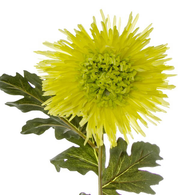 Other Artificial Flowers - Spider Chrysanthemum Green (90cmH)
