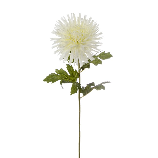 Other Flowers - Spider Chrysanthemum White (90cmH)