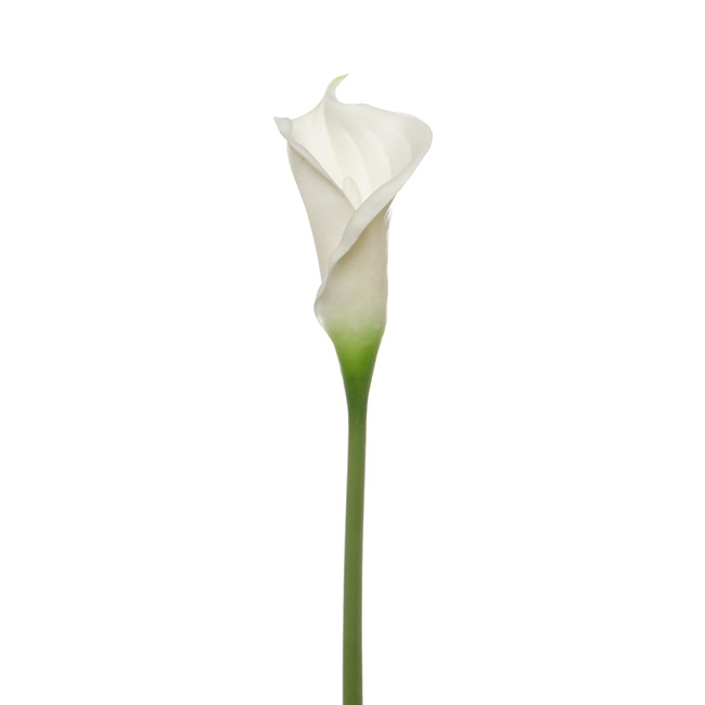 calla lily early bloom stem real touch white 60cmst. Black Bedroom Furniture Sets. Home Design Ideas