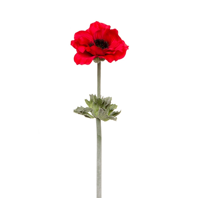 Other Flowers - Poppy Flanders with Black centre (55cmH) Red