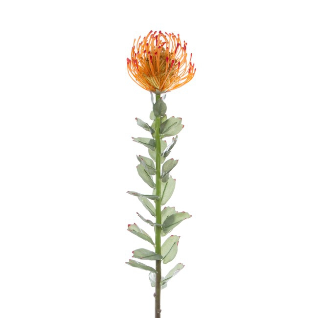 Australian & Native Flowers - Native Leucospermum Orange (70cmH)