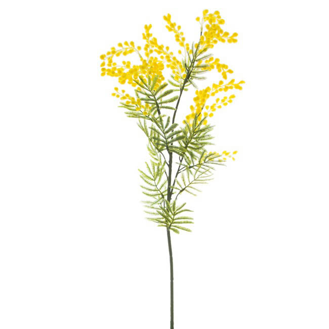 Australian Native Wattle Supreme Yellow (85cm.ST)
