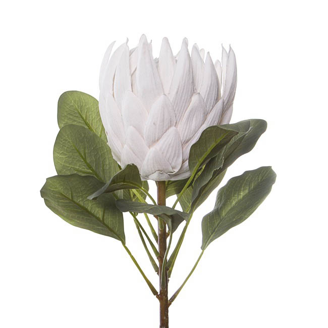 Australian Native Flowers - Australian Native King Protea White (73cmH)