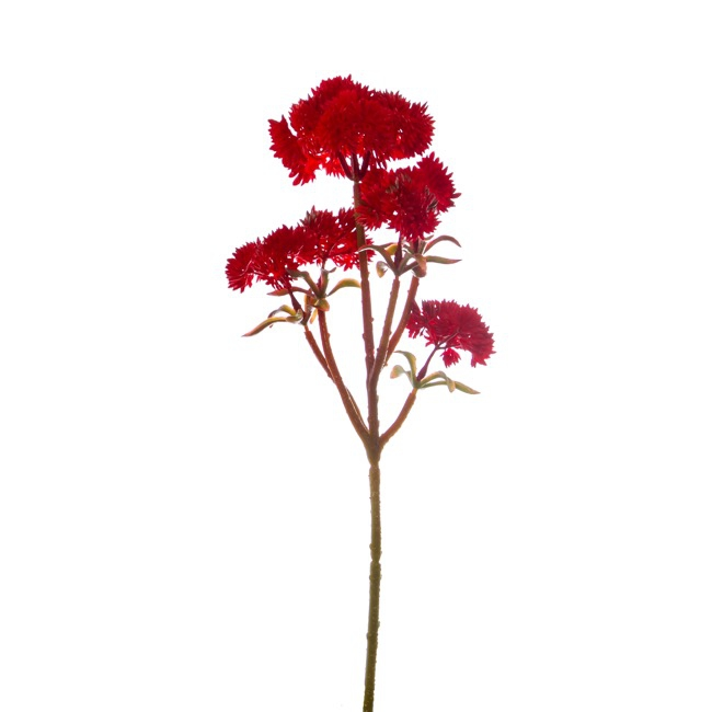 Other Flowers - Mini Sedum Spray (Billy Button) Bunch Red (34cm)