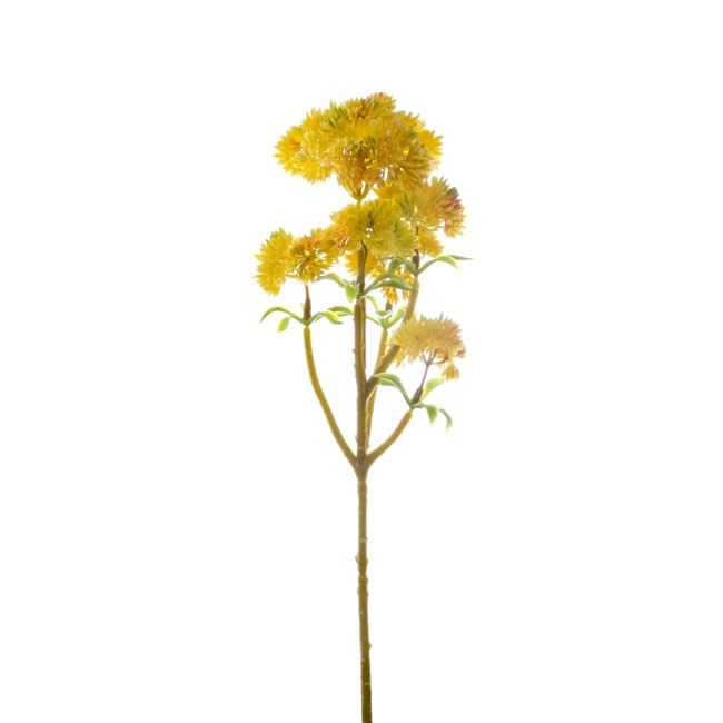 Billy Buttons Bunch Yellow (34cm)