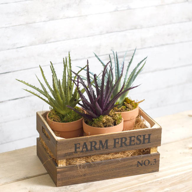 Artificial Succulents - Artificial Succulent Aloe Vera Grey (27cmH)