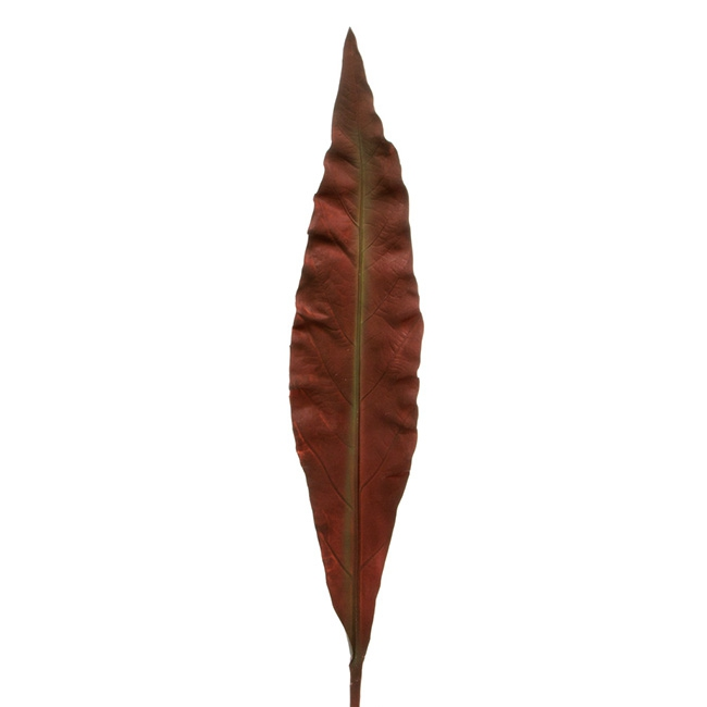 Leaf Aspidistra Real Touch Rust Brown (103cmH)