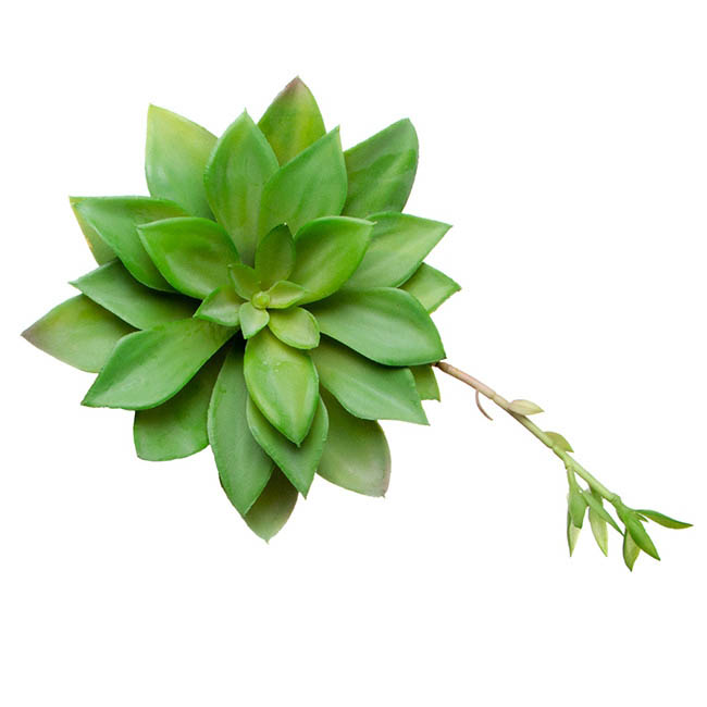 Artificial Succulents - Artificial Succulent Mini Agave with Bud Green (17cmDx20cmH)