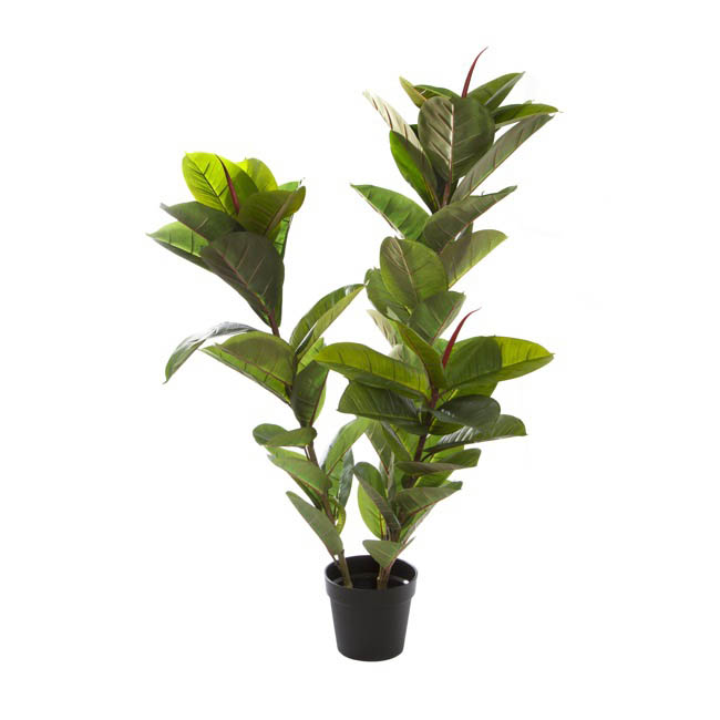 rubber tree potted plant green 130cmh
