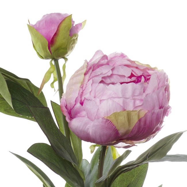 Artificial Peonies - Princess Peony Spray Pink (79cmH)