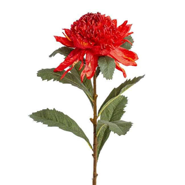 Australian & Native Flowers - Native Waratah Red (80cmH)