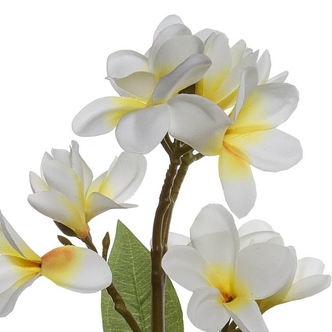Tropical Flowers - Frangipani Spray x4 Cream Yellow (68cmH)