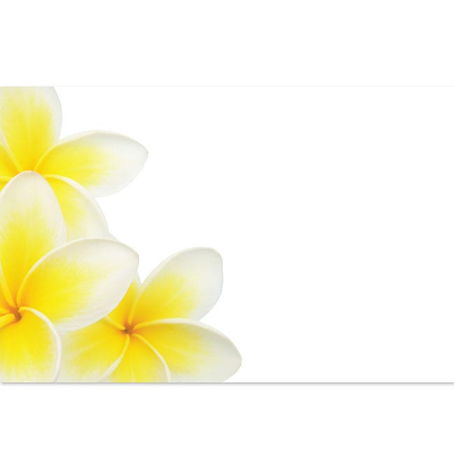 Cards Frangipani Cluster 50 Pack (10x6.5cmH)