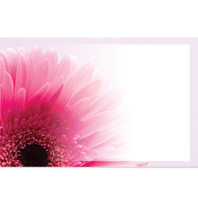 Cards Gerbera Pink with Border 50 Pack (10x6.5cmH)