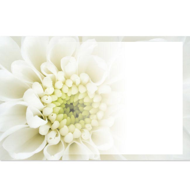 Florist Enclosure Cards - Cards Chrysanthemum Cream (10x6.5cmH) Pack 50