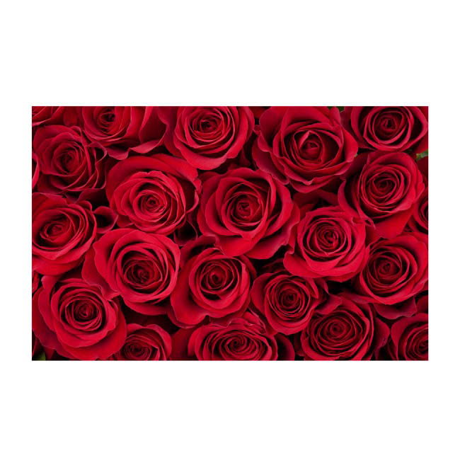 Florist Enclosure Cards - Cards Roses Bunch Red (10x6.5cmH) Pack 50