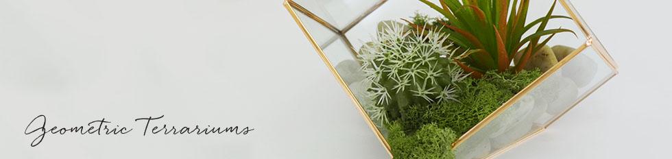 Geometric Terrariums Glass Terrariums Cloches Koch Co