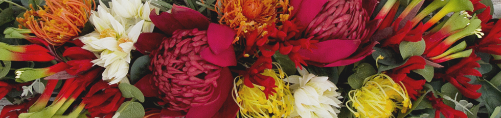 Buy Australian Native Flowers Online Trade Prices Koch Artificial
